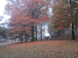 落ち葉を踏む散歩