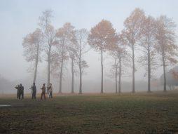 朝霧に霞むユリノキ