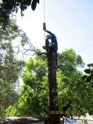 高木の伐採、剪定